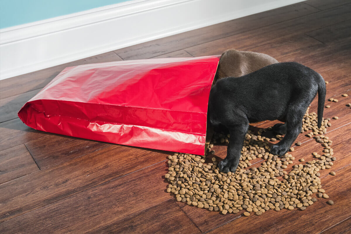 puppy-food